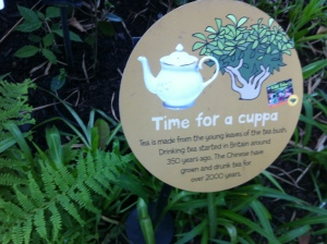 Tea interpretation panel for children